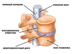Диагностика остеохондроза с помощью остеопатии