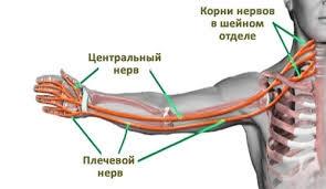 Виды нервов на руке