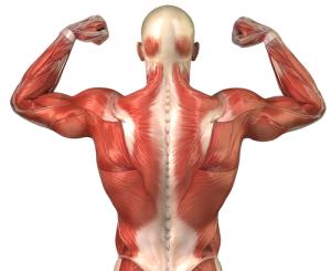Укрепление мышечного корсета при переломе позвоночника